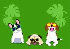 Dogs with glasses background. Three funny dogs with sunglasses on green background, back ground for summer time stock illustration