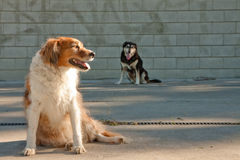 Dogs by a graffiti tagged urban concrete wall. Dogs in front of a graffiti tagged concrete brick urban wall Stock Photo