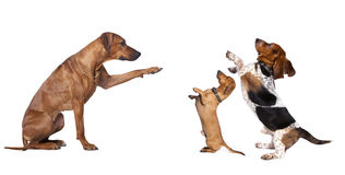 Dogs group. Group of dog standing in of white background royalty free stock photos