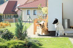 Dogs guarding house Royalty Free Stock Image