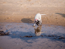 Dogs Royalty Free Stock Photos