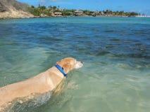 Dogs having fun in the ocean Royalty Free Stock Photos