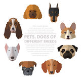 Dogs heads of different breeds. Royalty Free Stock Image