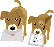 Dogs holding letter and photo. Illustration of two dogs holding letter and photo Royalty Free Stock Photography