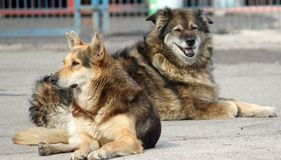 DOGS. Homeless dogs of İstanbul, lets keep them safe and warm Stock Photo