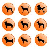 Dogs icon set Royalty Free Stock Images