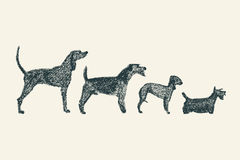 Dogs illustration Stock Photo