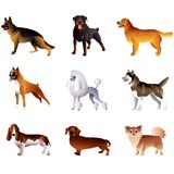 Dogs isolated on white vector set Royalty Free Stock Photography