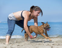 Dogs  jumping on beach Royalty Free Stock Photos