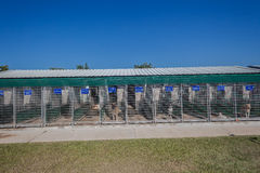Dogs kennel Cages Royalty Free Stock Photography