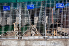 Dogs Kennel Cages Waiting Owners Royalty Free Stock Photos