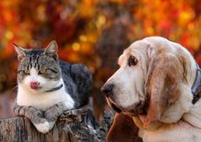 Dogs and kittens are hungry. Dog and kitten are hungry. Color photo Royalty Free Stock Photos