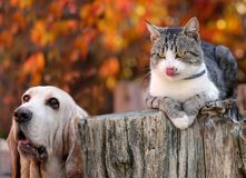 Dogs and kittens are hungry. Dog and kitten are hungry. Color photo Royalty Free Stock Photography