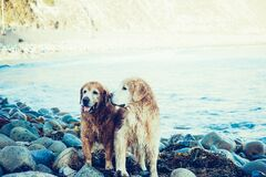 Dogs on lake shores