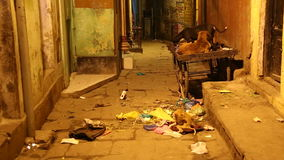 Dogs in laying at street filled with waste in Varanasi. stock footage