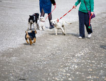 Dogs life royalty free stock image