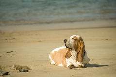 Dogs life royalty free stock photo