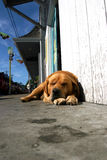 Dogs Life Royalty Free Stock Photography