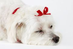 Dogs Life stock photo