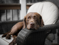 A Dogs Life Royalty Free Stock Images
