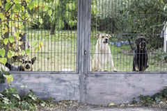 Dogs locked Royalty Free Stock Images