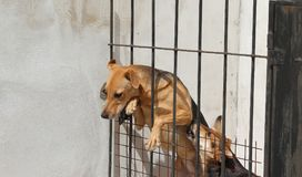 Animal abuse. Dogs locked up victims of animal abuse and abuse Royalty Free Stock Image