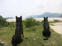 Dogs Look at Beach. Dogs (2 dogs) look out at the beach thinking about the beauty of the beach and hoping to play fetch Royalty Free Stock Photos