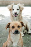 Dogs look Stock Images