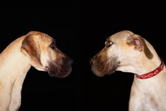 Dogs Looking Face To Face Stock Photos