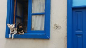 Two dogs looking out of window stock images