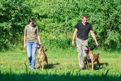 The dogs are looking at their owners. They are doing exercises Stock Photography
