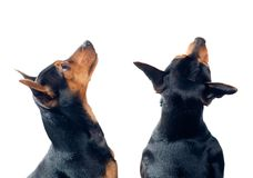 Dogs looking up Stock Image