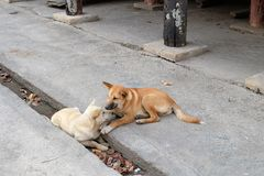 Dogs in love Royalty Free Stock Image