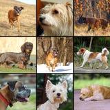 dogs lyckligt royaltyfri fotografi