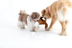 dogs lyckligt Arkivfoto