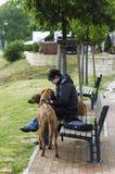 dogs lyckligt deras för flicka Fotografering för Bildbyråer