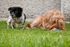 Dogs lying down Royalty Free Stock Photography