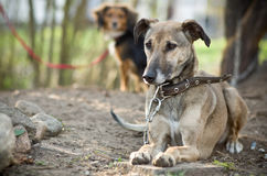 Dogs lying resting. On the ground royalty free stock photos