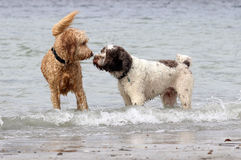 Dogs Make Friends royalty free stock photography