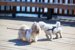 Dogs meeting royalty free stock photos
