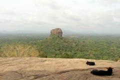 Dogs and monkeys enjoying Sigiriya - The Lion Rock-, as seen fro. M Pidurangala Rock. Taken in Sri Lanka, August 2018 royalty free stock photo