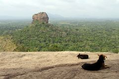 Dogs and monkeys enjoying Sigiriya - The Lion Rock-, as seen fro. M Pidurangala Rock. Taken in Sri Lanka, August 2018 stock photos