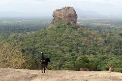 Dogs and monkeys enjoying Sigiriya - The Lion Rock-, as seen fro. M Pidurangala Rock. Taken in Sri Lanka, August 2018 royalty free stock image