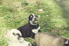 Dogs in nature. Dogs in the green grass in nature royalty free stock image