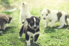 Dogs in nature. Dogs in the green grass in nature royalty free stock photography