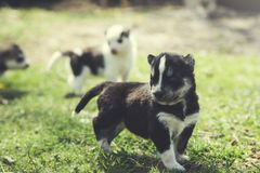 Dogs in nature. Dogs in the green grass in nature stock photography