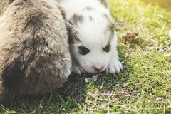 Dogs in nature. Dogs in the green grass in nature stock images