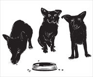 Dogs Near A Bowl. Silhouettes of three funny dogs near an empty bowl, illustration over white Stock Image