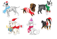 Dogs in a New Year suit. Dachshund dog in a New Year suit Royalty Free Stock Photography