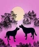 Dogs at Night Stock Images